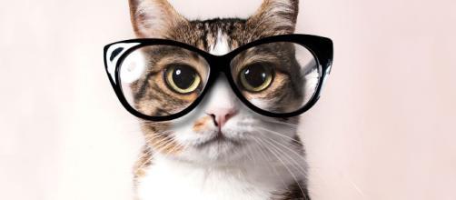 gatos en la televisión - caricaturas