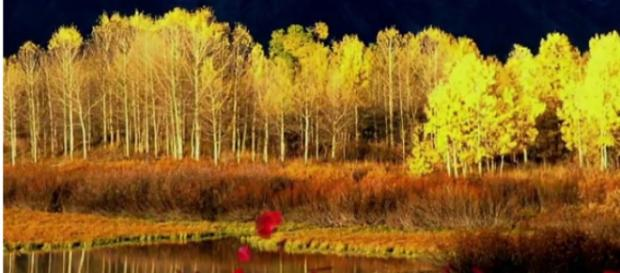 Pando The World's Oldest Living Organisms [Image courtesy – Charismatic Planet YouTube video]