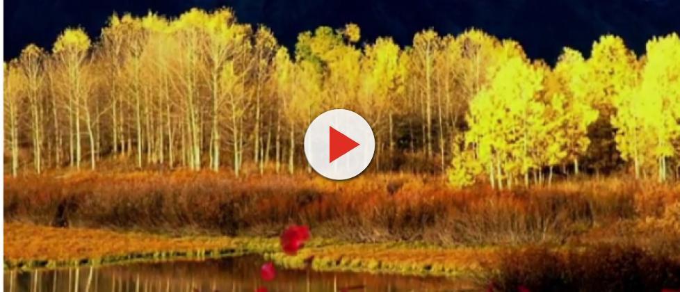 The Pando aspen clone of Utah is facing survival problems due to animal menace