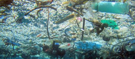 Pesquisa revela a presença de microplásticos no organimos de seres humanos