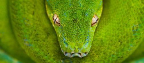 10 fotos de vida silvestre del fotógrafo de National Geographic, Frans Lanting