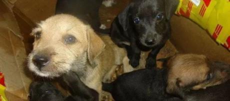 Cerca de 100 cães foram encontrados mortos no Ceará.
