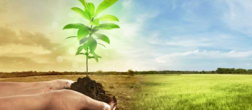 Qué puedo hacer para parar el cambio climático? Empieza por estas ... - ticbeat.com