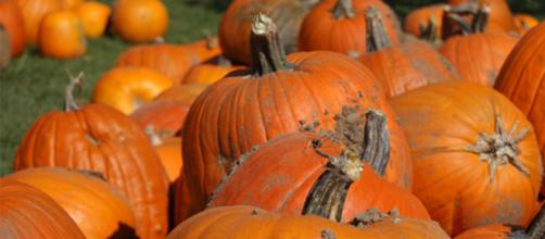 Twitter responds to National Pumpkin Day as only Twitter can respond [Image via grandandgorgeous.com/YouTube]