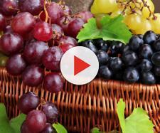 Le eccezionali proprietà benefiche dell'uva