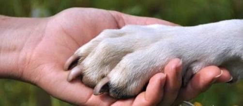 Em épocas comemorativas, muita gente solta rojões. Isso pode assustar seu cãozinho.