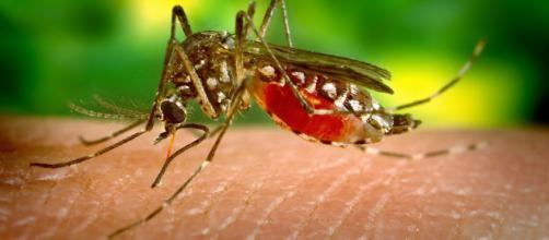 Una fuerte plaga de mosquitos afecta a residentes de Carolina del Norte. - hipertextual.com