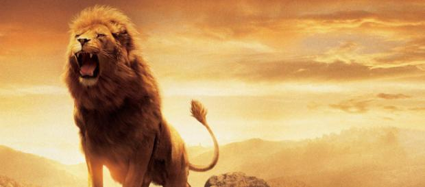"""Netflix is Set To Produce """"The Chronicles of Narnia"""" film and original series. [Image Credit] Collider Videos - YouTube"""