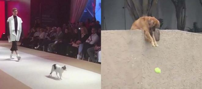 Cat and dog who want to be friends with everyone