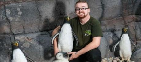 Telford Exotic Zoo is displaying plastic penguins in their new enclosure.[Image @Max1023FM/Twitter]