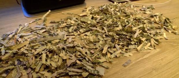 Ever wonder what $1,000 in shredded cash looks like? Wonder no more. [Image Eyewitness News/YouTube]