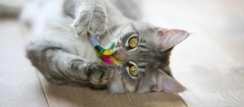 Os brinquedos evitam que o gato se aborreça e ajudam a desenvolver a inteligência e a personalidade.