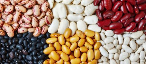 Existem aproximadamente 14 variedades de feijão, muitos estão presentes na mesa do brasileiro. (foto reprodução).
