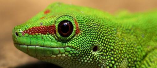 Os animais exóticos adquiridos ainda filhotes, comportam-se exatamente como animais domésticos.