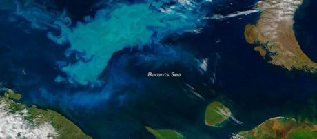 Barent Sea bloom - Russian fails in mapping - Image credit - earthobservatory | NASA | Gov