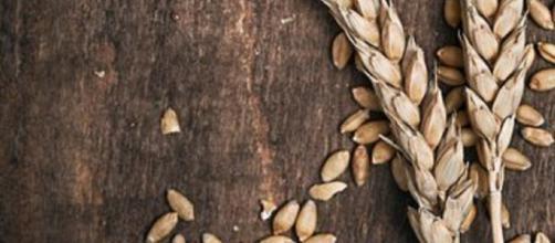 Glicemia: il cereale integrale è il migliore alimento salutare (Canva)