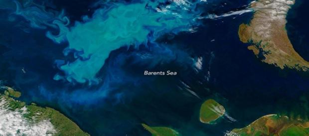 Barent Sea bloom - Russian fails in mapping - Image credit - earthobservatory   NASA   Gov