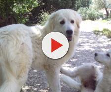 Città di Castello, anziana muore e dopo poche ore decede anche il suo fedele cane