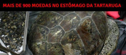 Na Tailândia, foram encontradas 915 moedas no estômago de uma tartaruga.