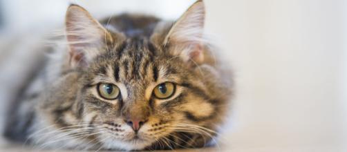 Os gatos possuem um instinto de sobrevivência que interfere em seu modo de viver. (foto reprodução).