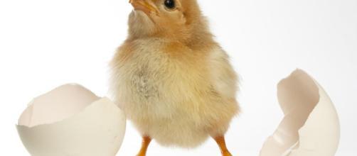 Meglio un'uovo oggi o la gallina domani?