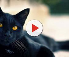 Gato León vai à fonte secreta e vê que tem uma intrusa no local