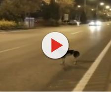 Vários internautas estão preocupados com a segurança do cão