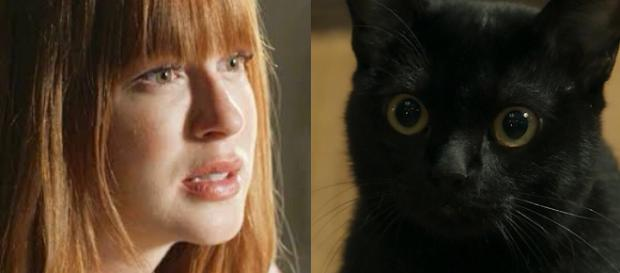 O misterioso gato carrega um grande segredo que promete surpreender o público ao vir à tona nos próximos capítulos da novela.