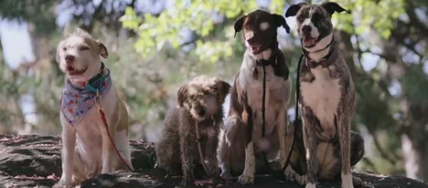 "Netflix Original series ""Dogs"" is streaming this weekend. [Image Netflix/YouTube]"