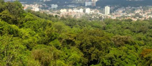 Parque Estadual Serra da Cantareira.