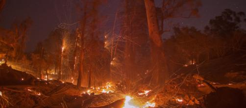 California's Political Fires - WSJ - wsj.com