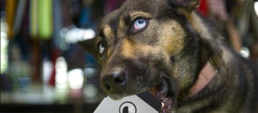 Aplicativos para cães facilitam a vida dos donos.