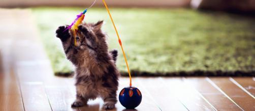 É muito importante brincar com o gato, para que ele desenvolva seu instinto de caça.