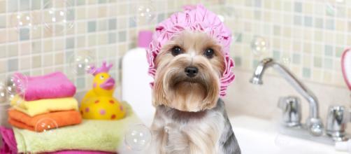 O banho e tosa devem ser mantidos no inverno.