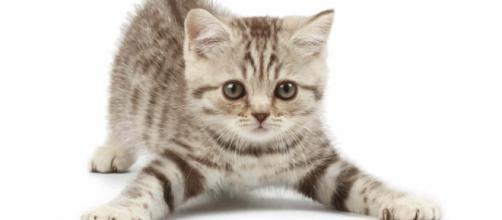 O gato age de maneira diferente quando está com alguém que ele gosta. (foto reprodução).