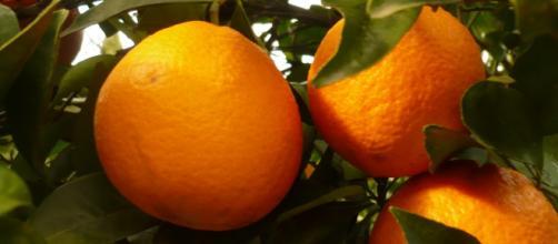 A laranja é o fruto de uma árvore da família Rutaceae.