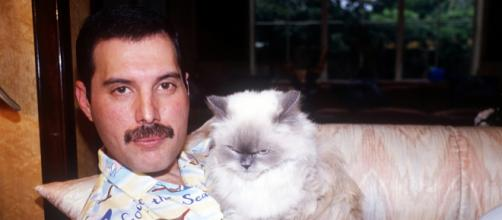 Freddie Mercury's Cats In Real Life Were Just As Spoiled As ... - bustle.com