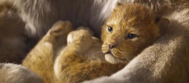 """Simba the lion cub in the reboot of """"The Lion King"""" [Image Walt Disney Studios/YouTube]"""