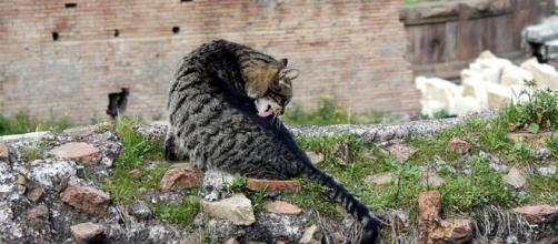 Torre Argentina is where Julius Caesar died, but now is home to dozens of cats. [Image Andou/Wikimedia]