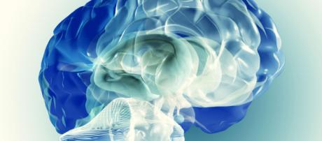 Scoperta una nuova zona nel cervello umano - fanpage.it
