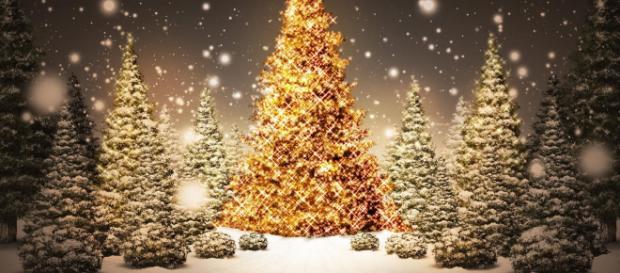 Offrez les cartes « cani-cadeau » pour Noël ! – Escapade Nordique - escapade-nordique.com