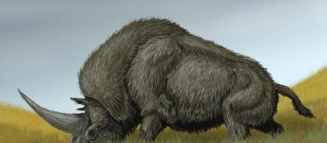 L'unicorno siberiano potrebbe aver condiviso una parte della sua esistenza con i primi uomini moderni