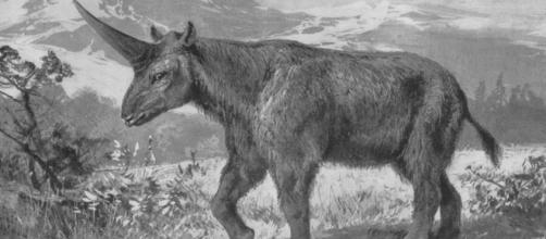 Sibarian Unicorn - Prehistoric Animals from 1908 in Tierbuch by Wilhelm Bolsche | Wikimedia