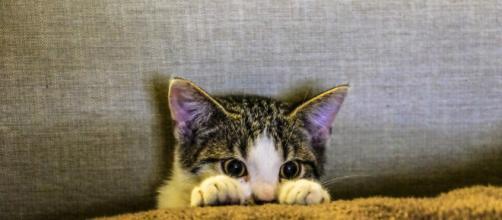 Os gatos podem se estressar facilmente se não houver cuidado. (foto reprodução).