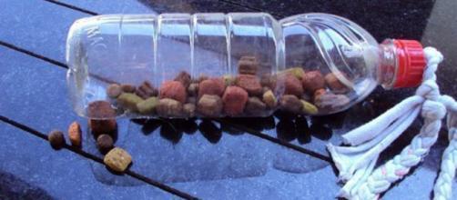 A garrafa pet recheada com ração é um dos brinquedos mais simples de se fazer em casa. (foto reprodução).