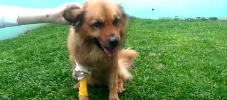 Cachorro se recupera no veterinário