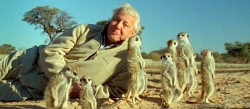 "Netflix will be streaming the nature documentary ""Our Planet"" with Sir David Attenborough. [Image Paul Reeves/Vimeo]"