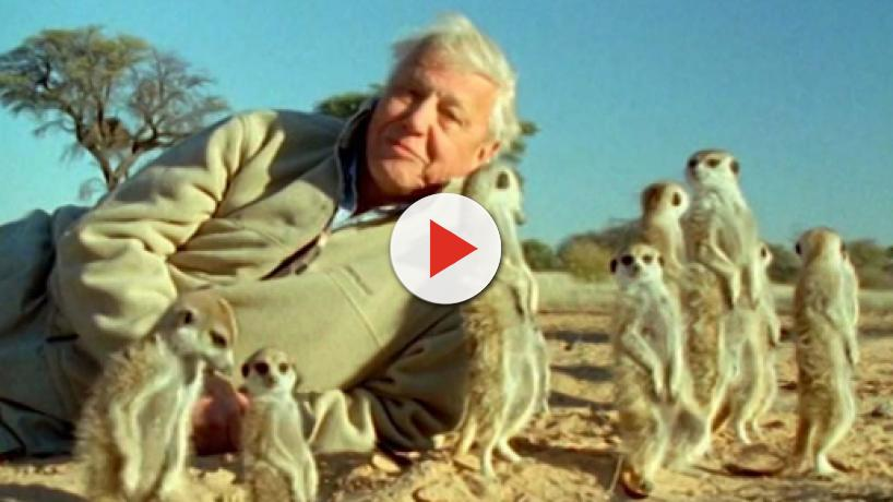 Netflix docu series Our Planet with Sir David Attenborough coming in April 2019