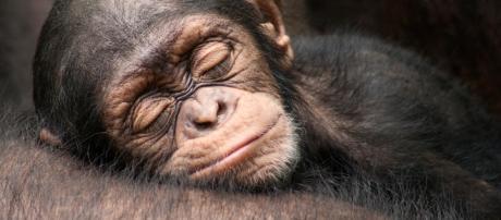 Alguns animais chamam a atenção pela imensa fofura já quando nascem (Reprodução: Hypescience)