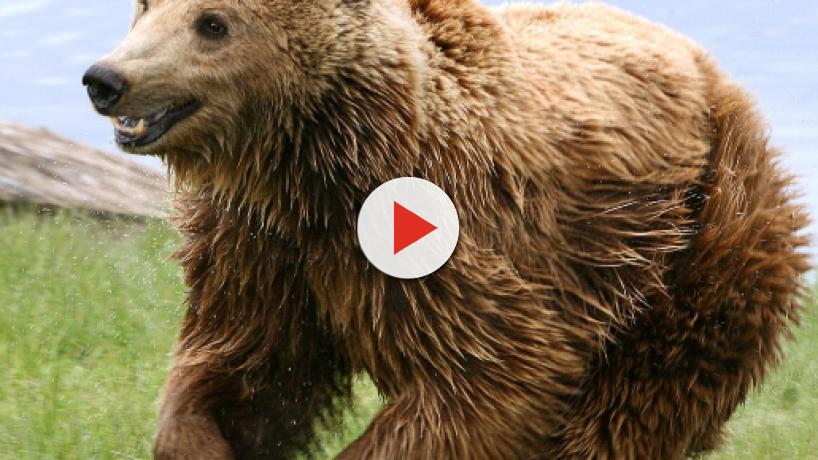 5 mamíferos europeos en peligro de extinción